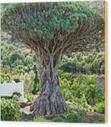 The Dragon Tree / El Drago Milenario Wood Print by Gavin Lewis