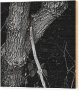The Drifter's Last Stop Wood Print by Odd Jeppesen