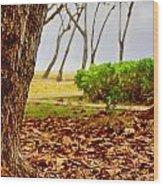 The Dry Season Wood Print