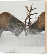 The Duel Of Fighting Elk Wood Print