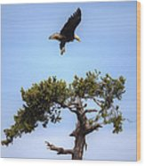 The Eagle Is Landing Wood Print