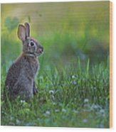 The Eastern Cottontail Wood Print