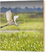 The Egret In Flight Series V3 Wood Print