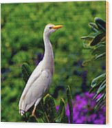 The Egret Outside My Window Wood Print