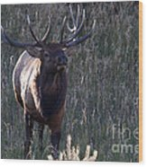 The Elegant Elk Wood Print