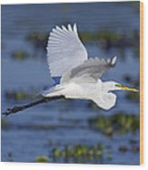 The Elegant Great Egret In Flight Wood Print