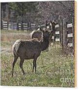 The Elk In Town Wood Print