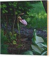 The Elusive Lady Slipper Lll Wood Print