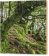 The Elven Forest No2 Wide Wood Print