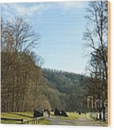 The Emme's Promenade Path Wood Print
