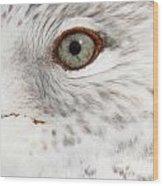 The Eye Of The Gull Wood Print