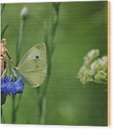 The Faerie And The Cabbage Butterfly Wood Print