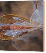 The Fairies Of The Milkweed Emerge Wood Print