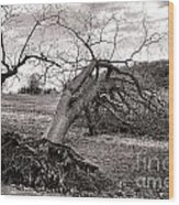 The Fallen Wood Print
