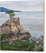 The Famous Lone Cypress Tree At Pebble Beach In Monterey California Wood Print