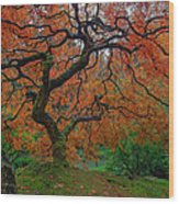 The Famous Tree At Portland Japanese Garden Wood Print