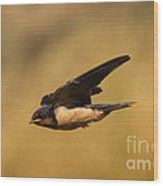 First Swallow Of Spring Wood Print