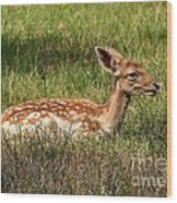 The Fawn Wood Print