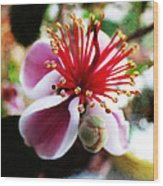 the Feijoa Blossom Wood Print
