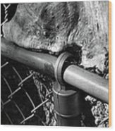 The Fence Eating Tree Wood Print