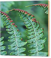 The Fern Wood Print