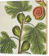 The Fig Tree Wood Print