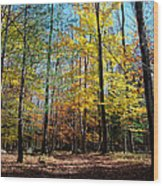 The Final Days Of Autumn Color Wood Print