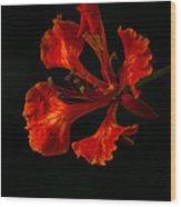 The Fire Flower Wood Print