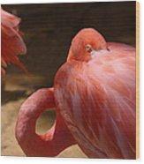 The Flamingo Wakens Wood Print