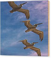 The Flight Of The Pelican Wood Print