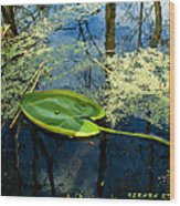 The Floating Leaf Of A Water Lily Wood Print