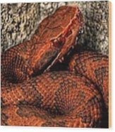 The Florida Cottonmouth Wood Print