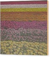 The Flower Field Wood Print