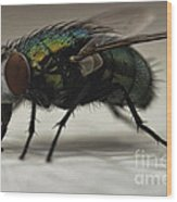 The Fly Macro Wood Print