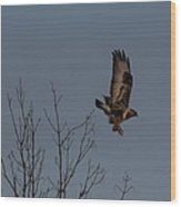 The Flying Hawk Wood Print by Rhonda Humphreys