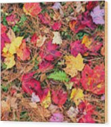 The Forest Floor Wood Print