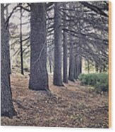 The Forest Of A Thousand Stories Wood Print
