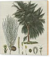 The Four-flapped Casuarina Wood Print