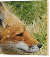 The Fox 7 Wood Print