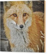 The Fox 8 Wood Print