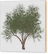The French Tamarisk Tree Wood Print