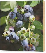 The Freshest Blueberries Wood Print