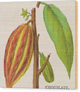 The Fruit Of The Cocoa (or  Chocolate) Wood Print