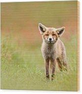 The Funny Fox Kit Wood Print