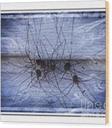 The Gathering - Long Leg Spiders Wood Print