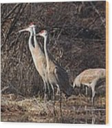 The Gathering...sandhill Cranes Wood Print