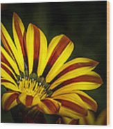 The Gazania Wood Print