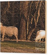 The Gazing And Grazing Sheep Wood Print