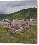 The Geese Of St Goar Am Rhein Wood Print