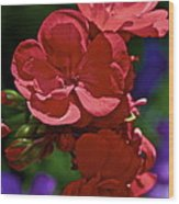 The Geraniums Wood Print